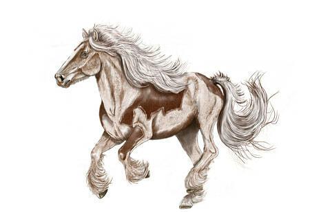 Fotografie koně - Jak malovat zvířata pro začátečníky