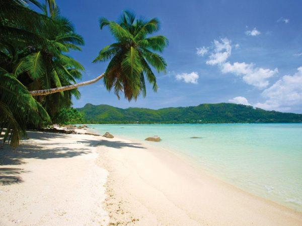 1Wall fototapeta Palmová pláž 315x232 cm