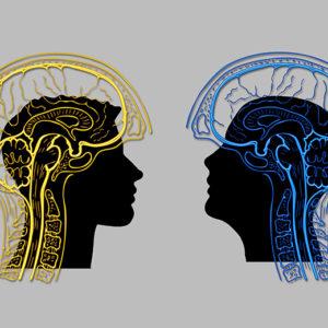Fotografie: lidské mozky