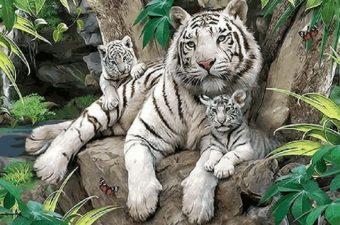 Fotografie: malovani podle čísel tygr