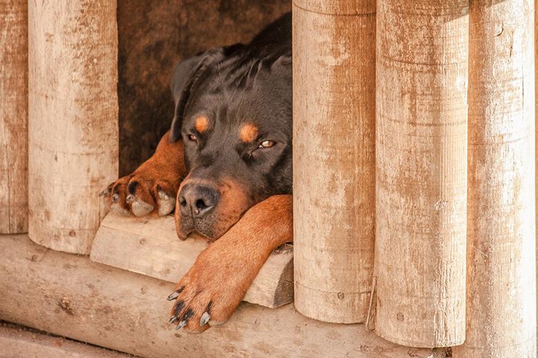 Fotografie: jak postavit boudu pro psa svépomocí