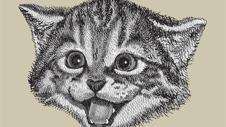 Fotografie: jak nakreslit zvířata