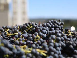 Domácí degustace vín – Pozdní sběry + bedna šesti druhů vína