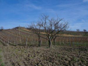 Domácí degustace vín – Zemská vína + bedna šesti druhů vína