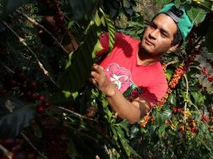 Online kurz přípravy kávy s pražírnou DOUBLESHOT + 5 druhů špičkové kávy + sada na přípravu kávy + kvalitní mlýnek