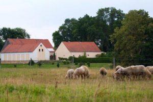 Farmářem na zkoušku – dvoudenní pobyt na statku + péče o zvířata