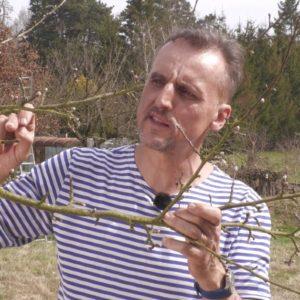 Péče o ovocné stromy a jejich údržba řezem